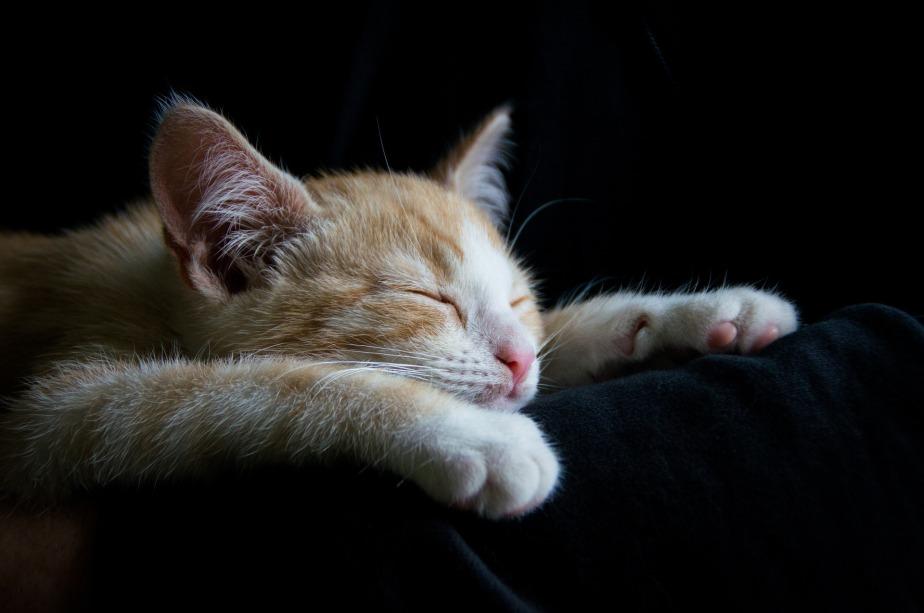 Vaincre la fatigue grâce à lanaturopathie