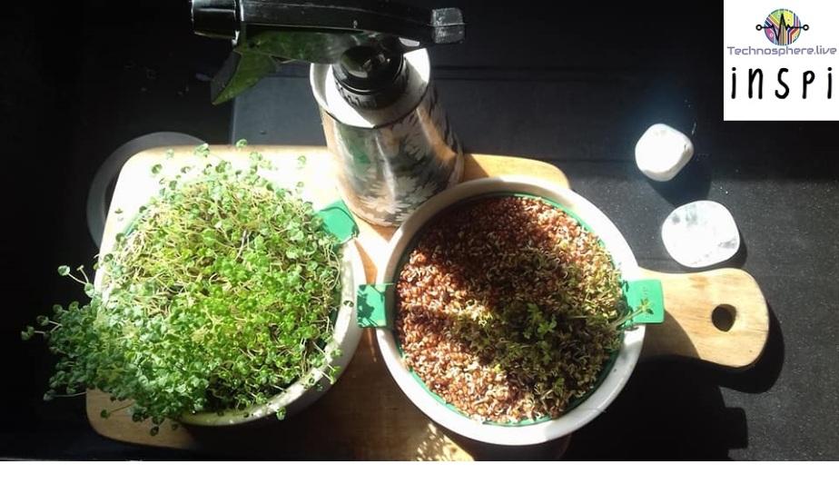 Pourquoi et comment manger des graines germées?